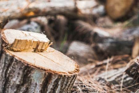 For A Free Tree Removal Quote in Alvarado, TX Call (817) 484-6763